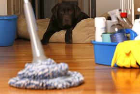 Cleaning floor8 jpg