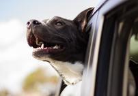 Happydog jpeg