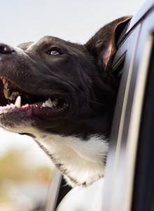 Happydog jpg