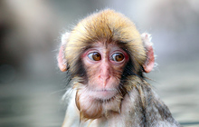 Monkey wet face sad sight 66614 2048x1152 jpg